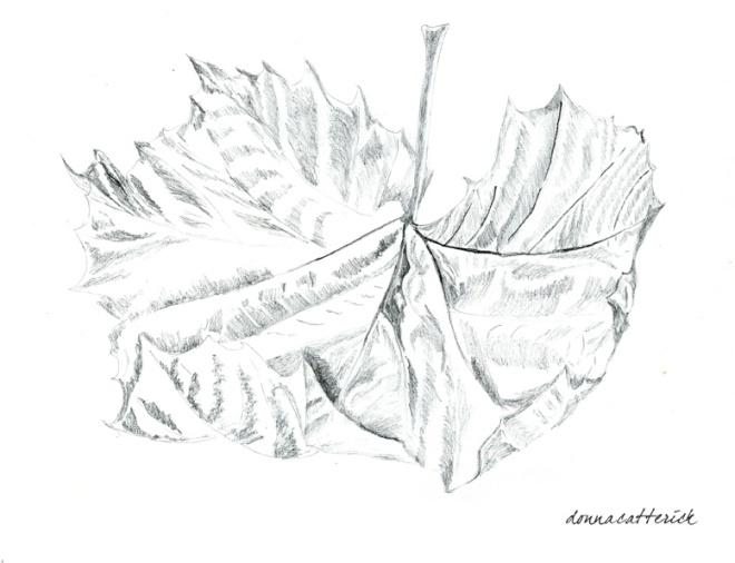 leaf one 2