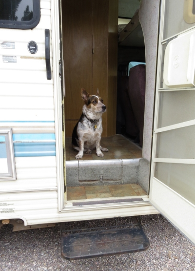 Cassie in the doorway.  She did not want to be left out as I prepped the RV.