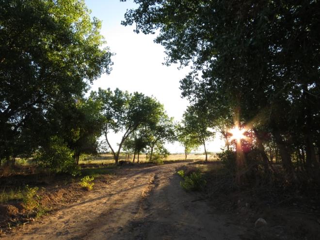 cl-road-sun-trees